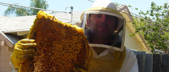Orange Bee Removal Guys Tech Michael