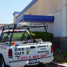 Orange Bee Removal Guys Service Truck
