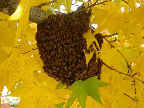 Orange Bee Removal Guys Picture of a 