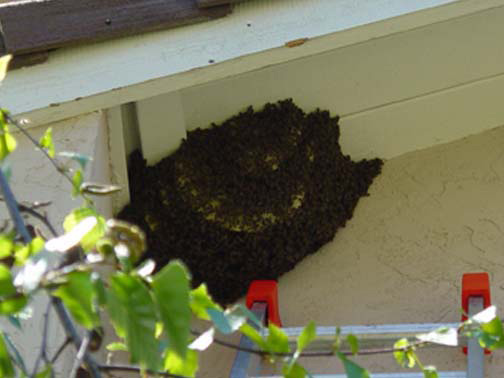 Bee Removal Orange This is a 