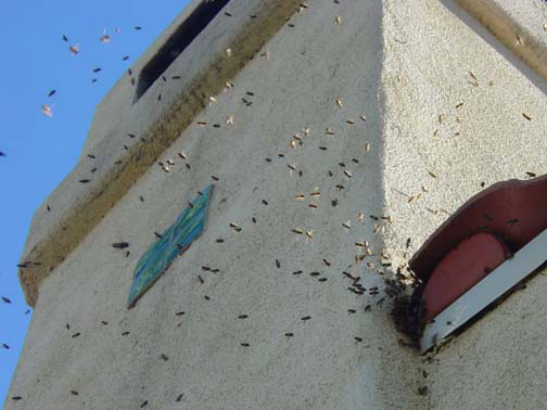 Bee Removal Orange This is 